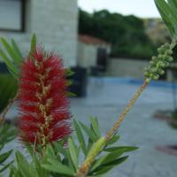 Softades Cottage, hotel in Omodos