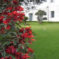 Fiore dell'Etna, hotel a Santa Venerina