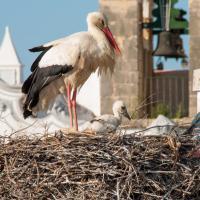 Stork Hostel, hotel em Olhão