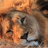 Umzolozolo Private Safari Lodge & Spa, hotel in Nambiti Private Game Reserve
