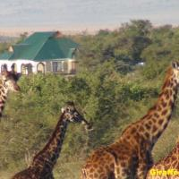 Narasha Guest House - Maasai Mara, hotel in Talek