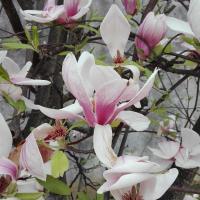 La Magnolia Appartamento, hotell i Cascina