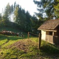 BIO-Peisingerhof