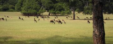 Hotels near Brijuni National Park
