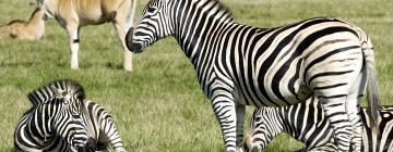 Hôtels près de: Parc Zoologique Cerza