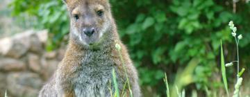 Oklahoma City Zoo: Hotels in der Nähe