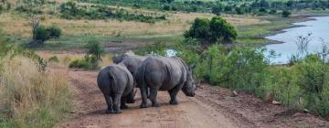 Hotels near Pilanesberg National Park