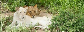 Сафари-парк: отели поблизости