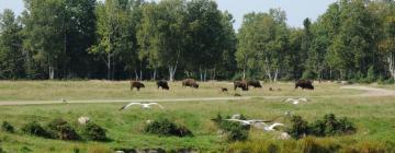 Hotéis perto de: Zoo Sauvage de Saint Felicien Centre de Conservation de la Biodiversit
