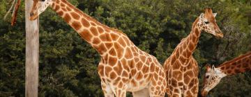 Hotels near Paphos Zoo