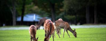 Parco di Nara: hotel