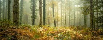 Hôtels près de: Forêt de Brocéliande