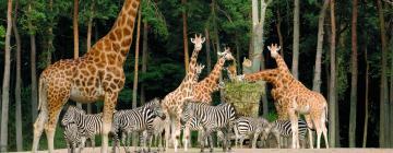 Hotels near Burgers' Zoo