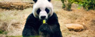 Тайбэйский зоопарк: отели поблизости