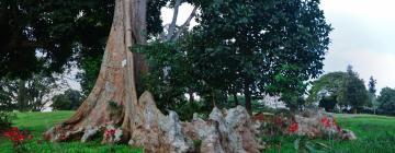 Hotels near Entebbe Botanical Garden