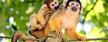 Hotels near Apenheul Primate Park
