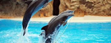 Ocean World Adventure Park, Puerto Plata: Hotels in der Nähe