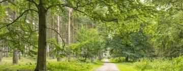 Hotels near Sherwood Forest