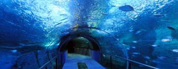 Hotels near Newport Aquarium