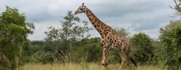 Hotels near Fota Wildlife Park