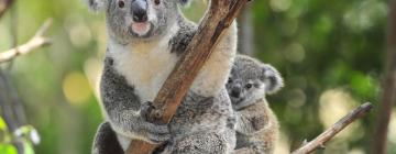 Hotéis perto de: Australia Zoo