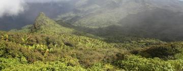 Hotels near El Yunque Rainforest