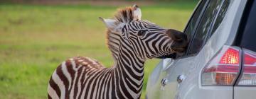 Hotéis perto de: African Lion Safari