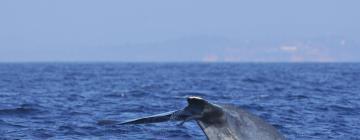 Whale Watching Mirissa: Hotels in der Nähe