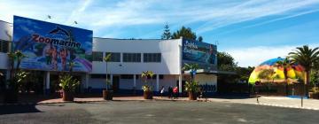 Hotels near Zoomarine Park