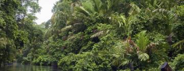 Hotels near Tortuguero National Park