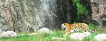 Zoo Safari Kolmården: hotel