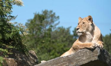Zoo Kristiansand Dyrepark: Hotels in der Nähe