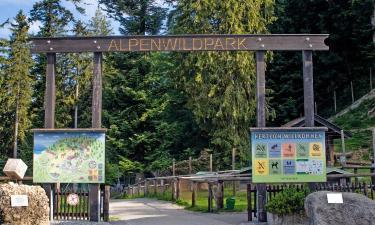 Hotels near Alpenwildpark Pfänder