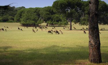 Национальный парк Бриюни: отели поблизости
