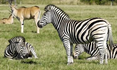 Hotels near Cerza Safari Park