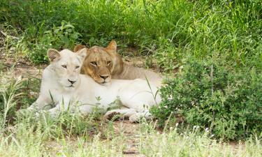 Hotels near Safari Park