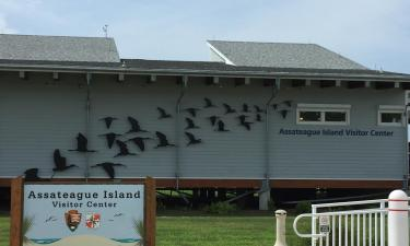Hotels near Assateague Island National Seashore
