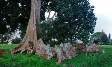 Entebbe Botanical Garden: отели поблизости