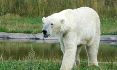 Hotels near Highland Wildlife Park