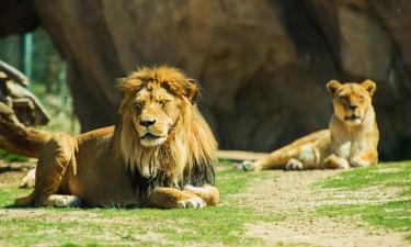 Hotels near Basel Zoological Garden