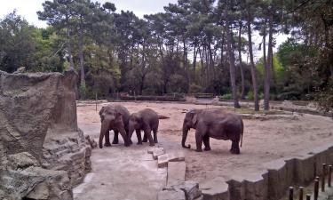 Hotels near La Palmyre Zoo