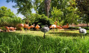 Ξενοδοχεία κοντά σε Ζωολογικός Κήπος Λισαβόνας