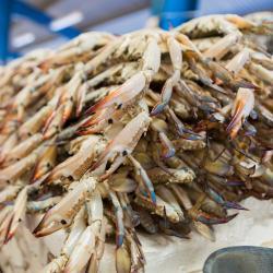 Yanbu Fish Market