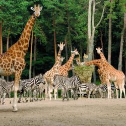 Koninklijke Burgers' Zoo