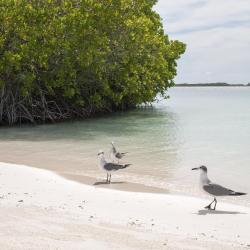 Boca Ciega Bay Aquatic Preserve