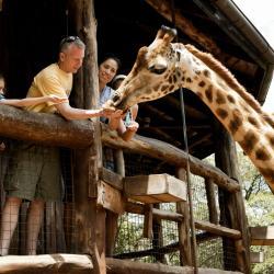 Centre Giraffe, Nairobi