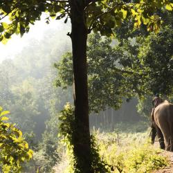 Kok Chang Safari Elephant Trekking