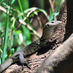 Livingstone Reptile Park