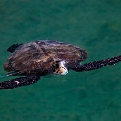 Dubai Turtle Rehabilitation Project