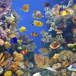 ReefHQ Aquarium